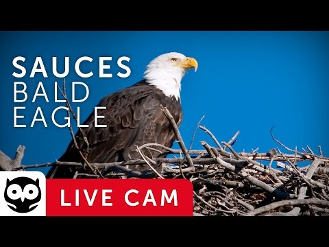 healthy creatures eagles